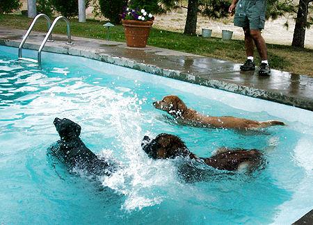 pool-time-dogs.jpg